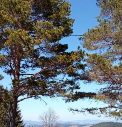 Raskošna ljepota sarajevskog Ozrena, u carstvu prirode