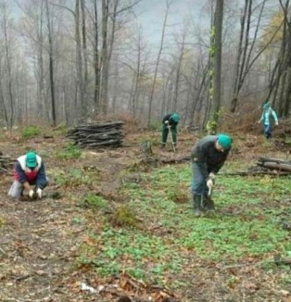 Jablanica će posaditi najmanje tisuću stabala u 2021. godini