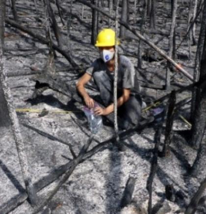 Beč - Nova otkrića o posljedicama požara u prirodi