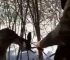 Šumari najavljuju hvatanje i kažnjavanje krivolovaca