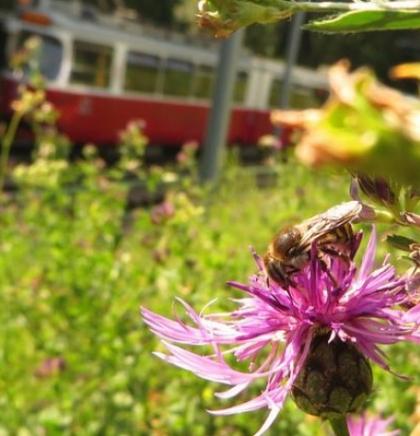 "Bečki javni prijevoznik ""Wiener Linien"" planira naseliti dva miliona pčela"