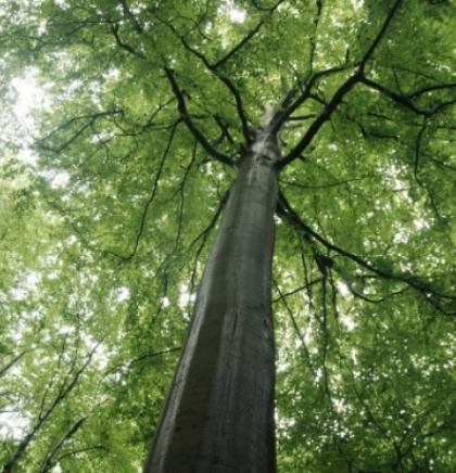 UNESCO proglasio prašumu Јanj kod Šipova prirodnim dobrom od svjetskog značaja