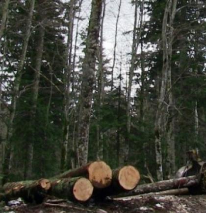 Planinarski savez KS - Crvena linija zaštite prirode i planina odavno pređena