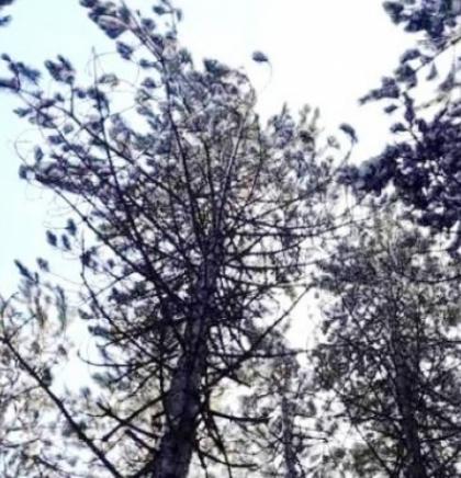 U Kantonu Sarajevo ponovo dostupni svi podaci o kvalitetu zraka