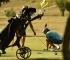 Golf turnir i promocija autohtonih hercegovačkih vina u subotu u Posušju