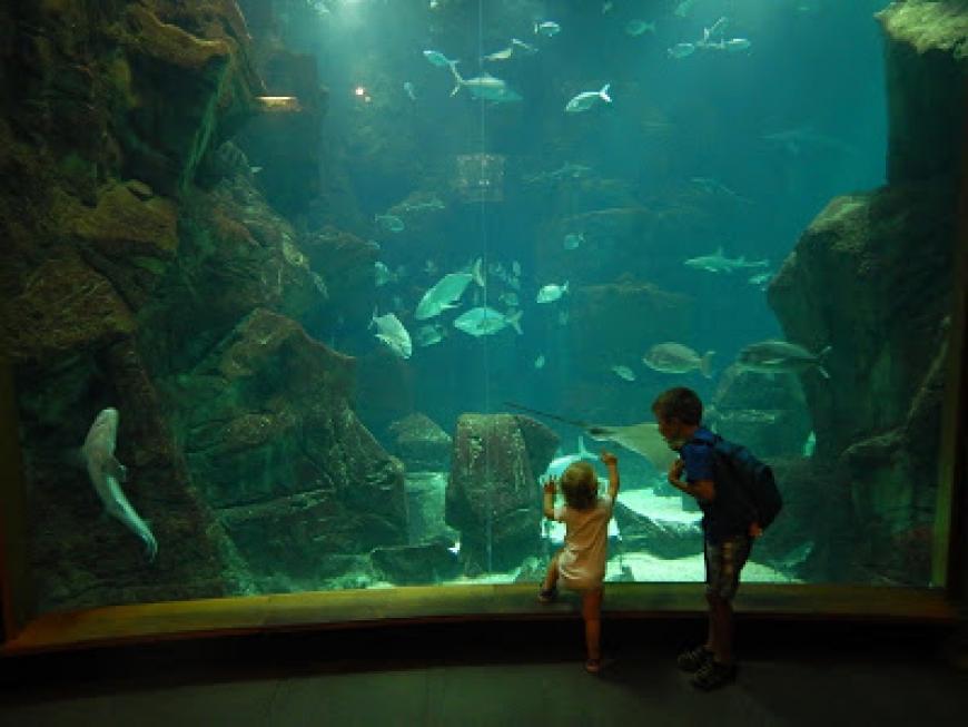 Akvarium Porto Moniz
