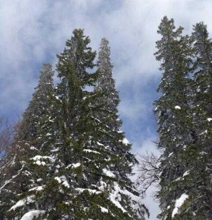 Jahorina pod aprilskim snijegom