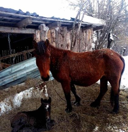 Konji na Bukoviku